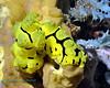 Nudibranch 16