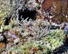 Nudibranch 22