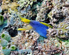 Blue Ribbon Eel 4
