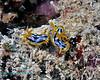 Nudibranch 28