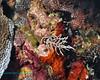 Nudibranch 14