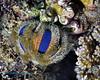 Sea Urchin Poss