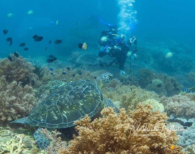 Gary shooting a portrait of a Hawksbill Turtle on the reef at Apo Island