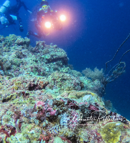 A much larger (and more common) Tassled Scorpionfish - about 12 inches long - lies atop the reef (across the bottom of this photo, facing left).  Their name is derived from the fact that they have sharp, painful spines along the top of their body.