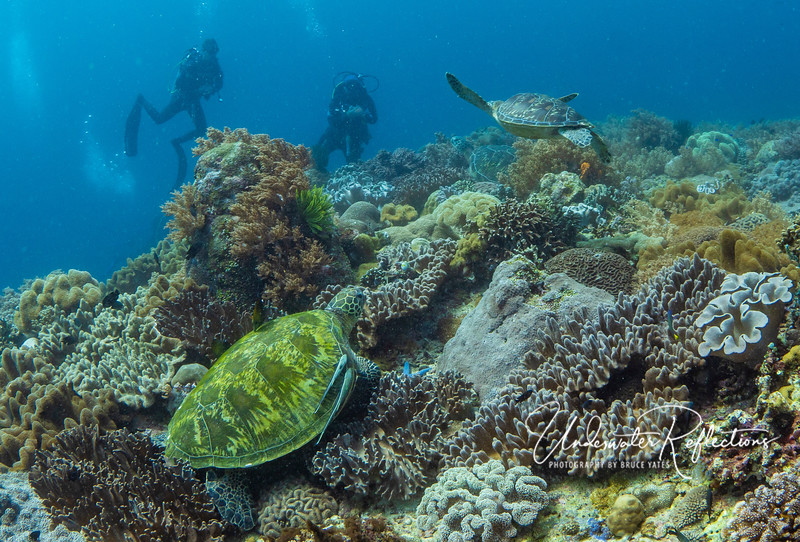 """3-in-1 photo at Apo Island - Adrian and Luke watch an """"airborne"""" Hawksbill turtle (and another on the reef closer to them), but can't see the big Green Turtle with two Remoras near to me."""