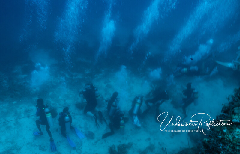 "A far different scenario applies to viewing Thresher Sharks near Malapascua.  It is tightly controlled, with divers having to stay behind ropes in designated viewing areas.  Furthermore, the Thresher Sharks aren't lured in - they come near divers as part of their natural behavior - they swim by to get ""cleaned"" (i.e., have parasites and dead skin picked off by butterflyfishes), so it is very much on their terms."