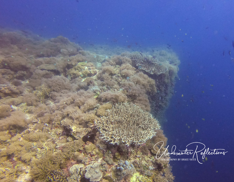 Hard corals along edge of wall drop-off