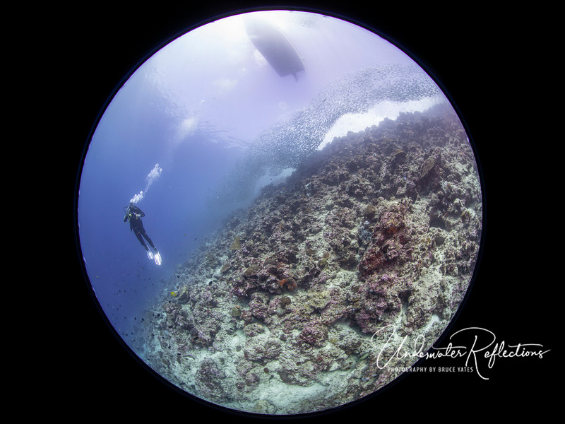 I only used my Canon 8-15mm circular fisheye lens on one dive - with the school of millions of sardines.  Here, David hovers beneath the sardines, as well as a boat on the surface above.