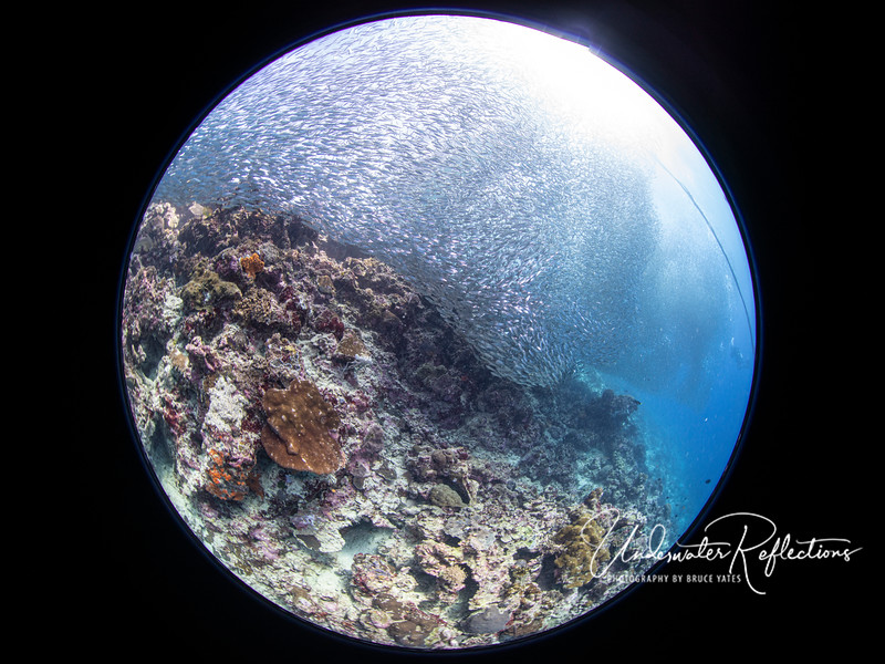 Whole lotta sardines