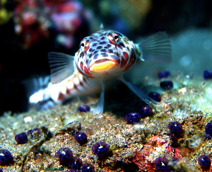 Adore that little face. I believe it's a species of goby.