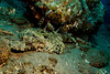 3512 flat headed crocodile fish