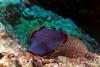 2842 blue flat worm