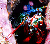 """DEADLY ME""<br /> Peacock Mantis Shrimp<br /> Manado, Indonesia<br /> 20""x24"""