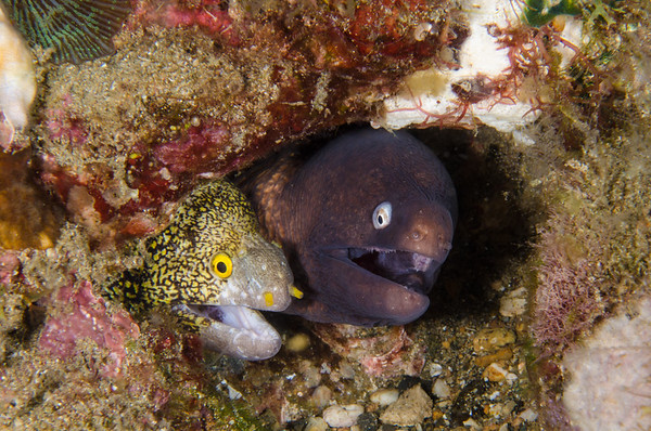 eels laughing at a really funny joke I told