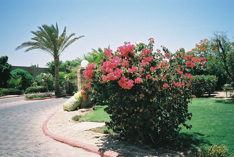 26 Gardens