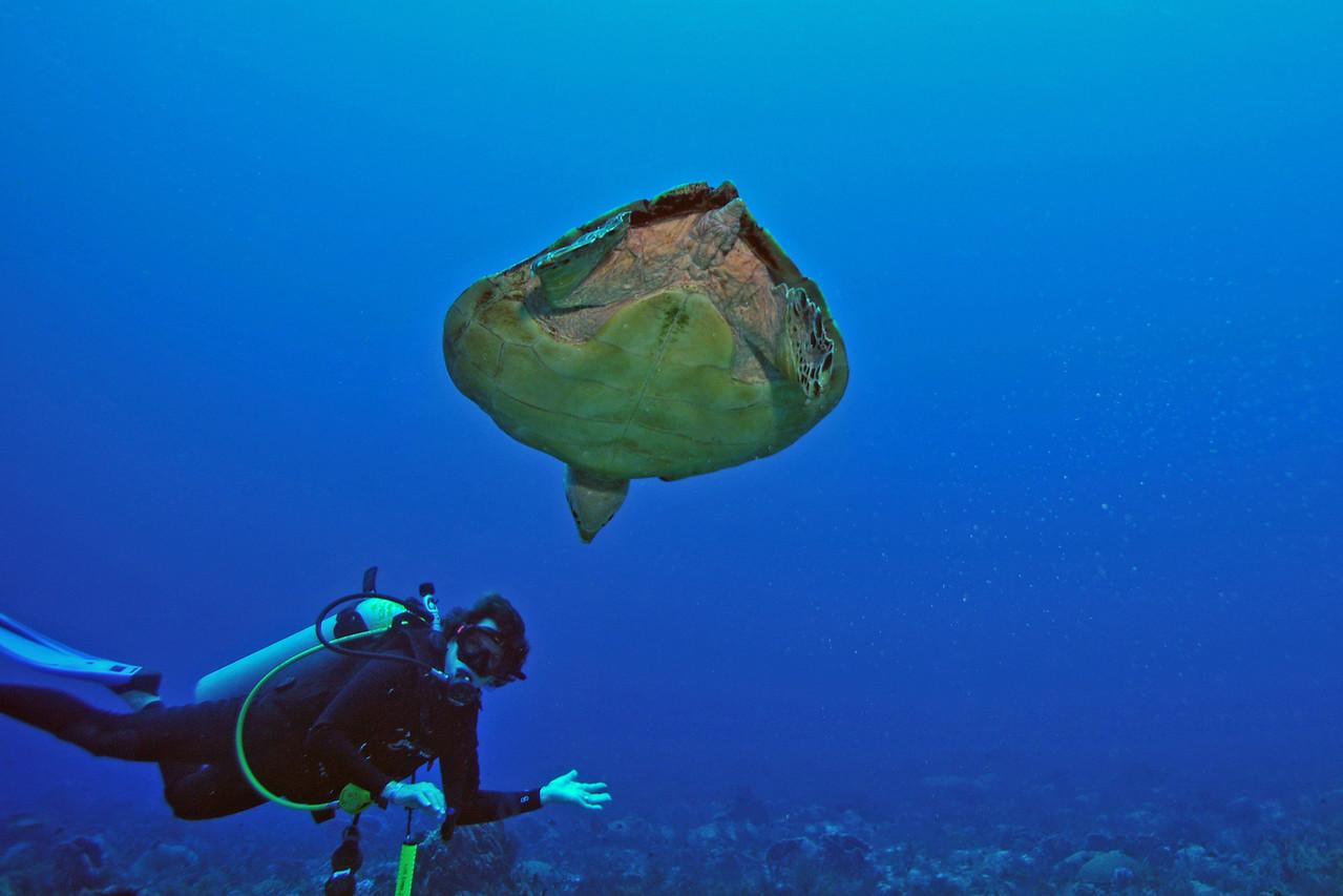 Viki Coyne with Hawksbill Sea Turtle, Playa del Carmen - November 2012