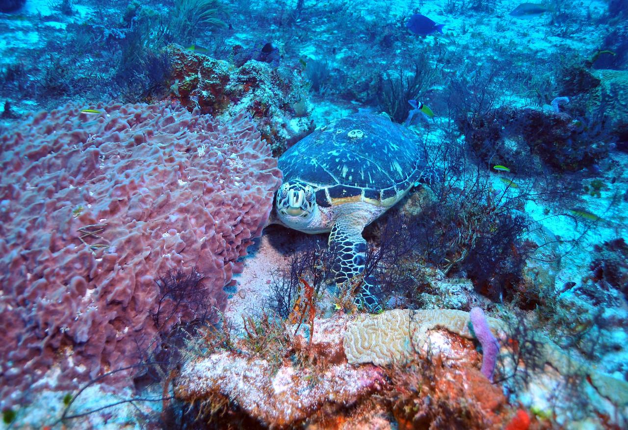Tortuga Reef, Cancun - November 2012