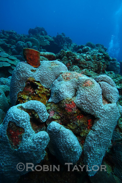 The reef surrounding the wreck is quite healthy.