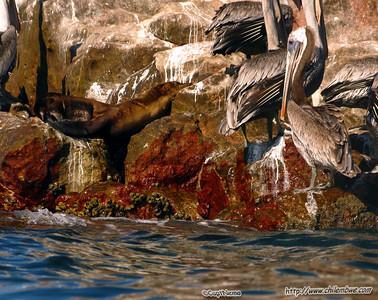 Bird Island, Puerto Penasco, Mexico.