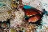Punta Cana Web - 15