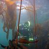 Me in kelp, photo by Stan Kurowski