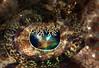 Eye of a Crocodile Fish