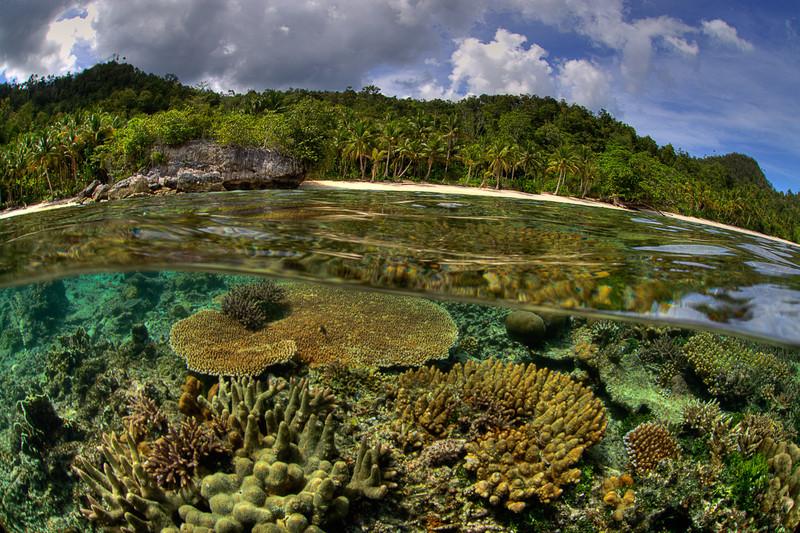 Reef meets Jungle-overunder image