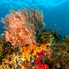 Soft and Hard Corals 2, Raja Ampat