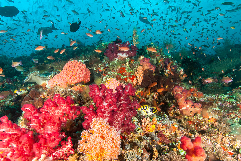 Raja Ampat Reef Scape