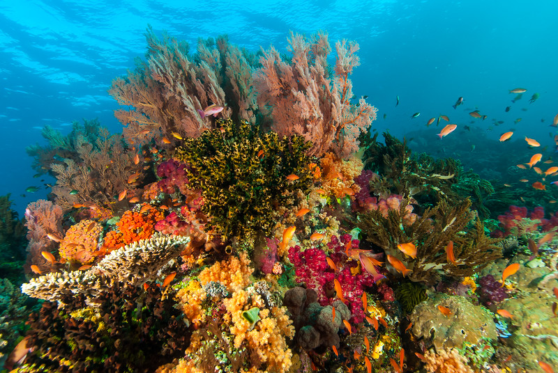 Soft and Hard Corals, Raja Ampat