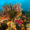 Soft and Hard Corals, Raja Ampat