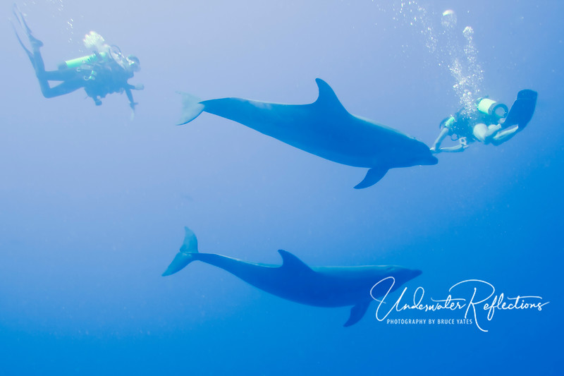 The same pair of wild Bottlenose dolphins interacting with my two dive buddies.  This encounter was one of the highlights of the trip for me.