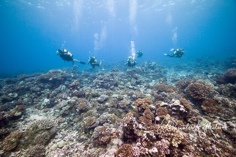 Rangiroa is known for drift diving, which is done during incoming tides through the two Northern passes (gaps) in the atoll.  Here, a group of divers enjoys gliding along the coral reef during such a drift dive.
