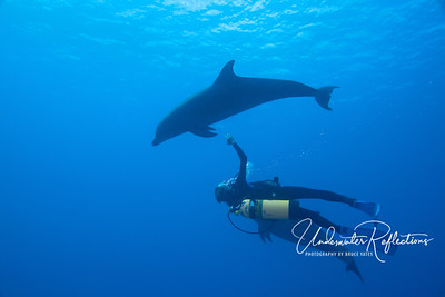 Here, the two bottlenose dolphins do acrobatics with Stephanie, our dive guide.
