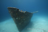 The bow of Ray of Hope, a large freighter sunk near our shark feeding site.