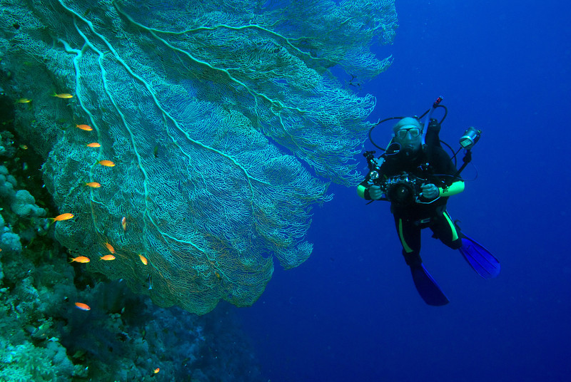 My buddy, Björn, with a huge gorgonian fan coral at Elphinstone Reef.