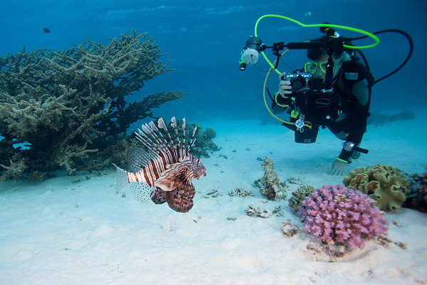 Lionfish, seen on every dive.