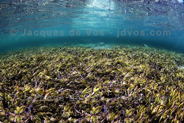Sea Grass Underwater Seascape - Red Sea