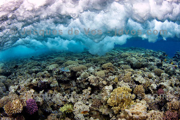 Waves Over Coral (wide)
