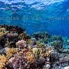 Colorful Underwater Seascape - Red Sea