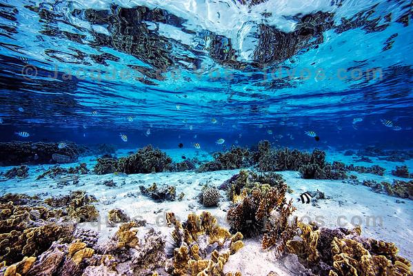Red Sea Coral & Lagoon Seascape