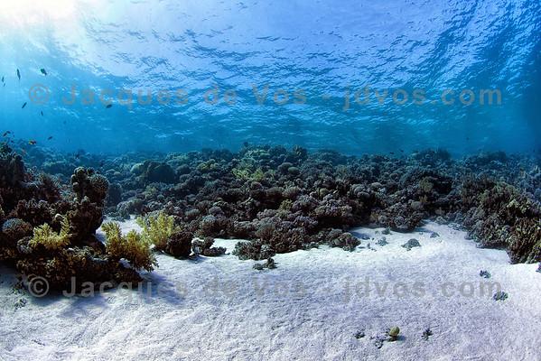 Sandy Underwater Coral Seascape