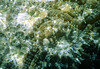 CORAL POLYPS - Unknown