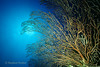 DEEP WATER SEA FAN