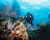 Diver over Bermuda Reef