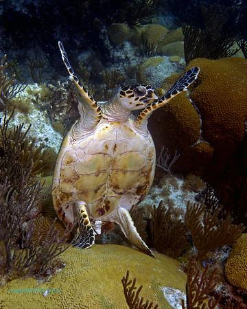 Reef Portraits Bermuda