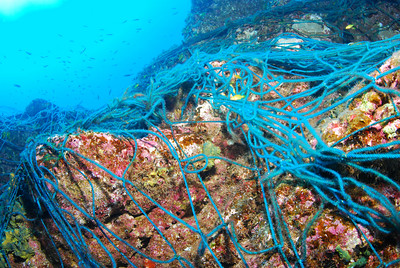 Illegal commercial nets, removed with the help of the Mexican Navy