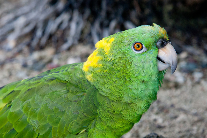 Polly the toe-attacking parrot who didn't like men.