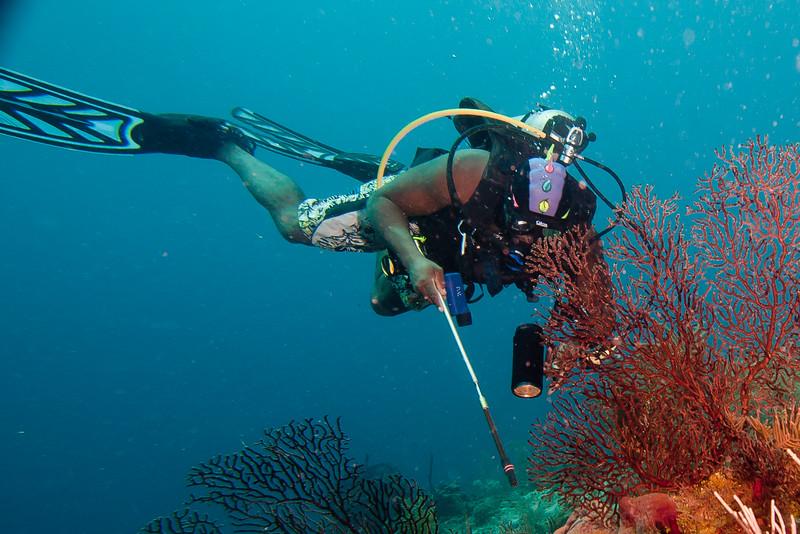 Davit on the hunt.  Deepwater Sea Fan.