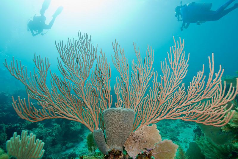 Sponge and sea fan.